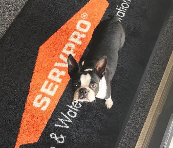 Darla our SERVPRO pup